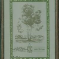 Certificato relativo ai dieci alberi piantati da Liko a Ben Shemen in memoria di Onesto Coruzzi  * Dalla ricerca della VB dell'Istituto
